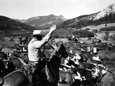 Bob Staffanson on a cattle drive.