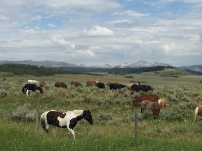 Horses wander near the heart of the Greater Yellowstone Ecosystem