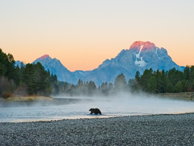 """First Light-Grizzly"", Thomas Mangelsen's photograph of Grizzly 399 crossing the Snake River, is awe-inspiring.  But events in a bear's life can turn on perilous moments."