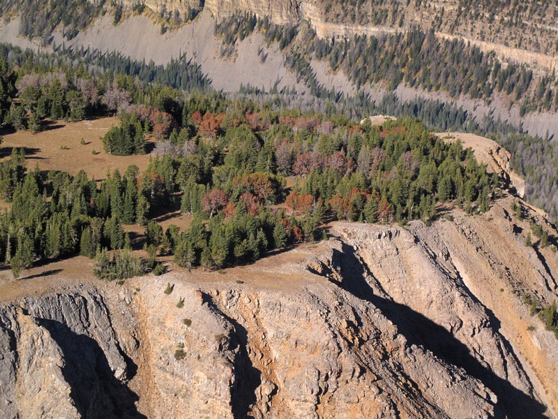 At the top of a ridge, a whitebark pine forest is in the fight of its life.  Photo courtesy Ecoflight (ecoflight.org)