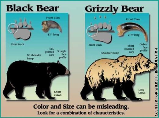 Can you tell the difference between a black bear and grizzly? When a Wyoming off-duty game warden shot a grizzly in 2013, he claimed mistaken identity in his defense. Graphic courtesy Montana Fish Wildlife and Parks