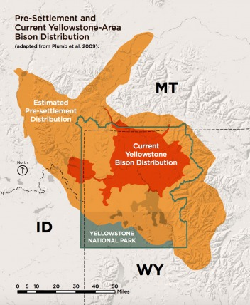 Map created by National Wildlife Federation for its report, The Future of Yellowstone Bison Management based on National Park Service data.