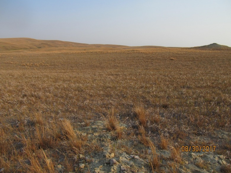 In the recently-released Montana Climate Assessment, a team of scientific experts noted that climate change could spell disaster for dryland farmers and beef growers on the high plains. Photo courtesy USDA