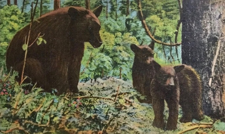 Antique postcard featuring black bears in New York state's Adirondack mountains.