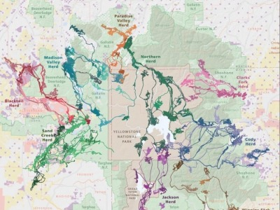 Map of elk migration in GYE