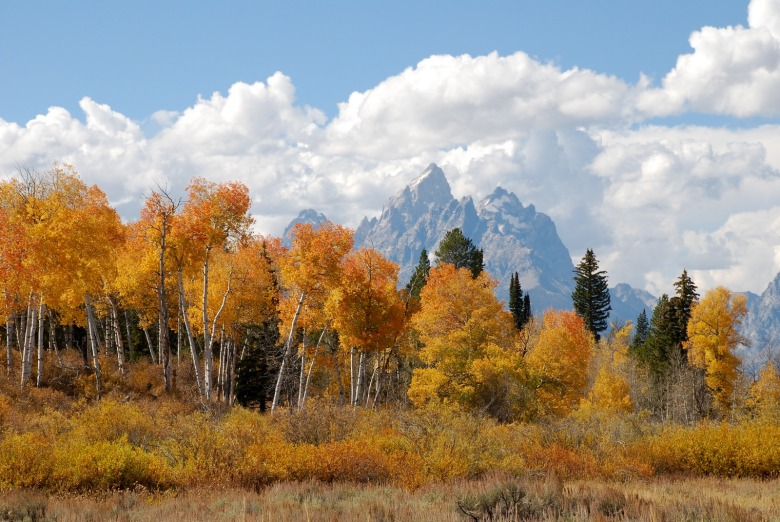 A priceless view belonging to the American public in Jackson Hole. Photo by Susan Marsh