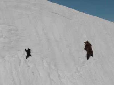 Two bears climb a perilous snow snowfield