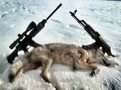 Coyote taken in Wyoming hunt