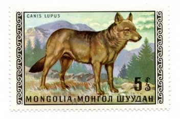 The wolf has been featured on Mongolian postage stamps. Image courtesy Susan Fox