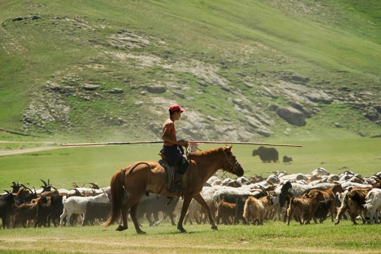 The steppe of Mongolia has been likened to high, open and treeless country of Montana and Wyoming. Herders there confront the same wildlife predator issues that their counterparts in the American do. And wolves are killed to protect livestock and in hunts. Still, cultural attitudes are different, Watters say, and people are shocked to learn that in America wolves were targeted for annihilation. Photo courtesy