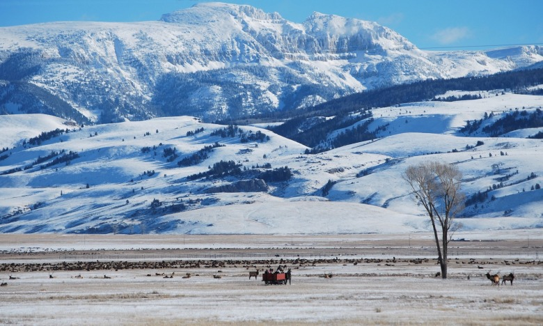 Photo courtesy National Elk Refuge