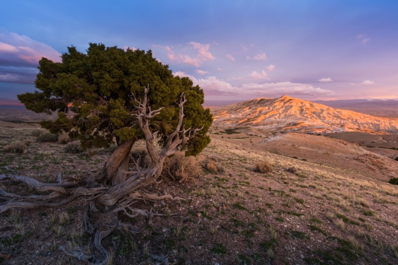 Twin Buttes Wilderness Study Area astride of the Devils Playground WSA in Wyoming. Photo courtesy Nicolaus Wegner