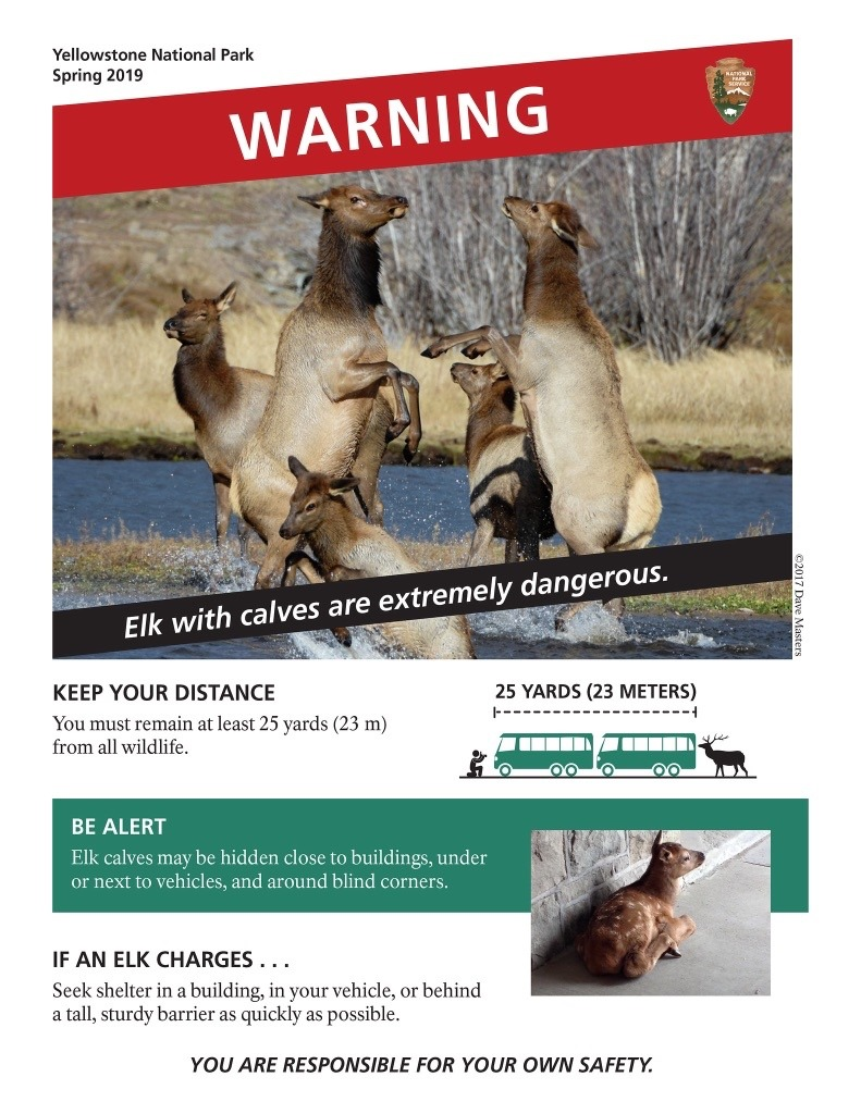 A special advisory created by Yellowstone and circulated on social media in an attempt to reduce the number of dangerous encounters between visitors and wildlife. Many say the awareness campaign, thanks to viral circulation, is working. Image courtesy Yellowstone National Park