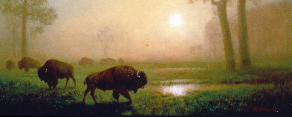 Bison-inspired conservation and business