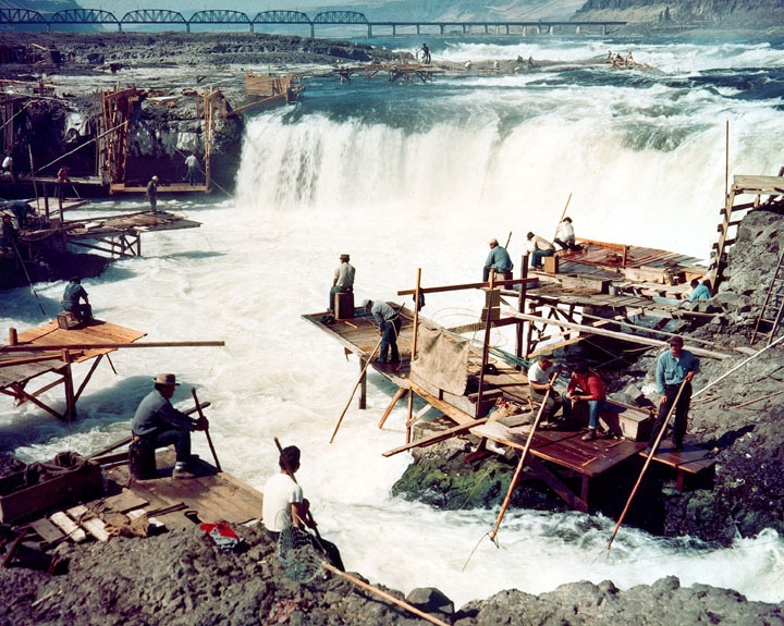 Indigenous people dipnet fishing for salmon at the Cul-De-Sac of Celilo Falls on the Columbia River in the mid 1950s, just prior to completion of the dam known as The Dallas. The resulting reservoir submerged the falls and the dam blocked fish passage. Evidence shows that native people converged upon Celilo going back 15,000 years. in 1805, Lewis & Clark in their journals noted the huge gathering of people there to harvest fish, observing it was the largest they had seen on their journey. Photo courtesy US Army Corps of Engineers.
