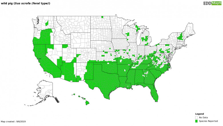 A map showing where feral hogs are confirmed to be. Image courtesy Center for Invasive Species/EDD MapS (www.eddmaps.org)