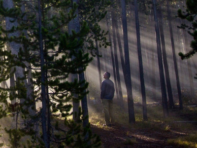 A hiker admires misty sun rays in a Yellowstone forest