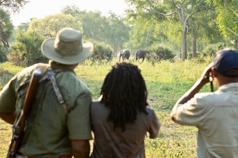 Gaby and colleagues on a walking safari in Gorongosa, watching a family group of elephants. Photograph courtesy Brett Kuxhausen