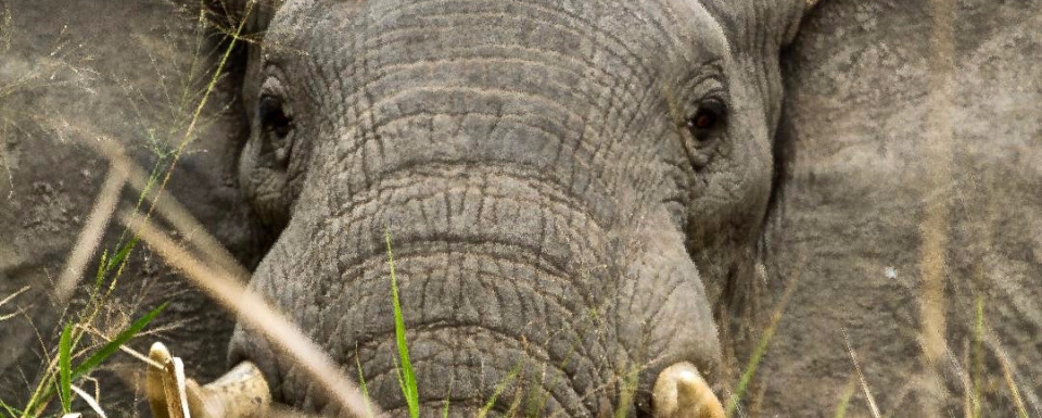 What is the best way to protect an elephant?