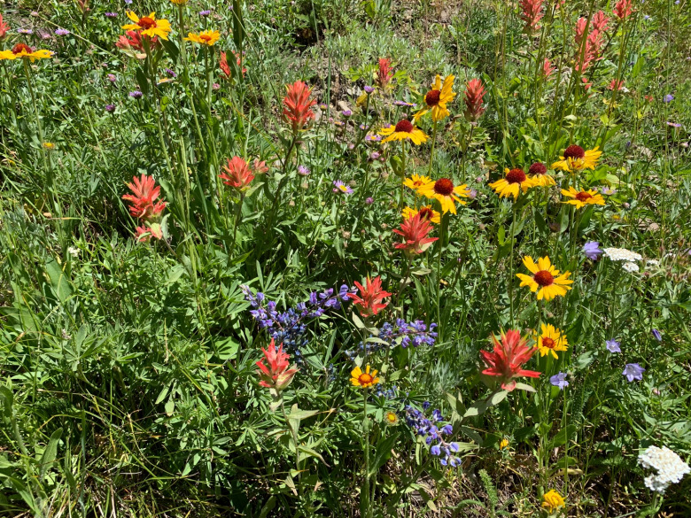 Just a smidgen of summer wildflower diversity in the mountains of Greater Yellowstone. Photo by Todd Wilkinson