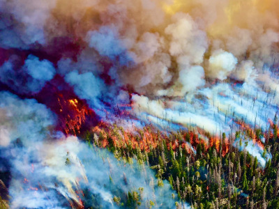 A forest fire in Yellowstone