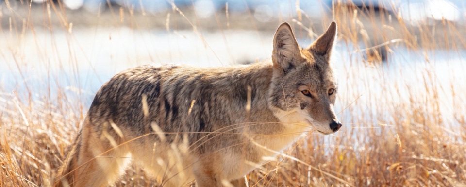 Do wildlife killing contests give hunting a bad rap?