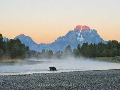 Want to go grizzly watching in Jackson Hole?