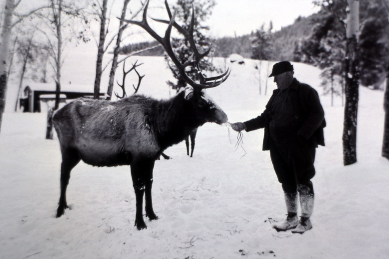 The Yellowstone we know today was arguably less wild a century ago when caretakers had Draconian ideas about predators, had poor understanding of wildlife biology and sometimes saw their role as choreographing an entertaining experience for visitors fit for the times.  Here, elk are fed by hand in the Lamar Valley in about 1930, around the time wolves were ruthlessly eliminated from the park. Photographer unknown/courtesy NPS