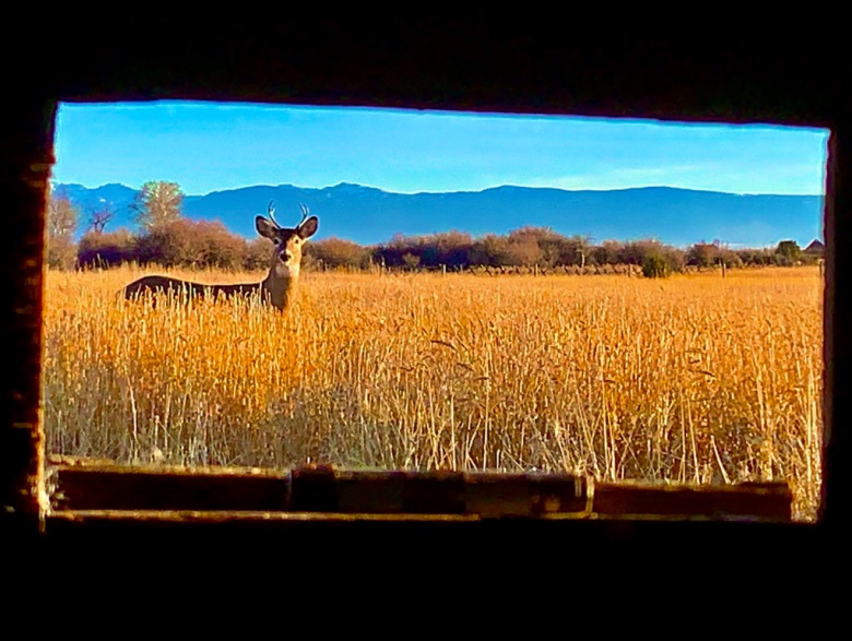 Chronic Wasting Disease is no longer out of sight and mind for residents of America's fastest-growing micropolitan area with the announcement that a CWD-infected deer was confirmed in the Gallatin Valley just beyond Bozeman's back door.  Photo by Todd Wilkinson