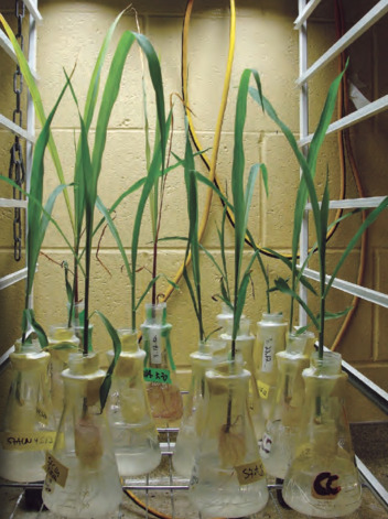 Prion uptake in plants is being studied at the USGS National Wildlife Health Center. Photo courtesy USGS/Christina Carlson