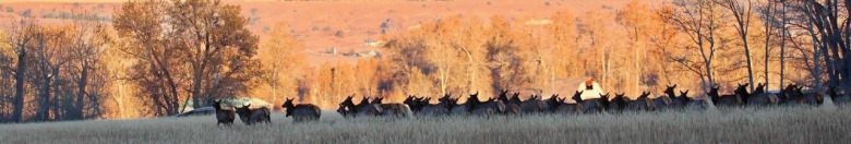 Each passing year in the Gallatin Valley south and west of Bozeman it becomes more difficult for elk to thread the needle in their passage through exurban sprawl. Photo courtesy Holly Pippel.